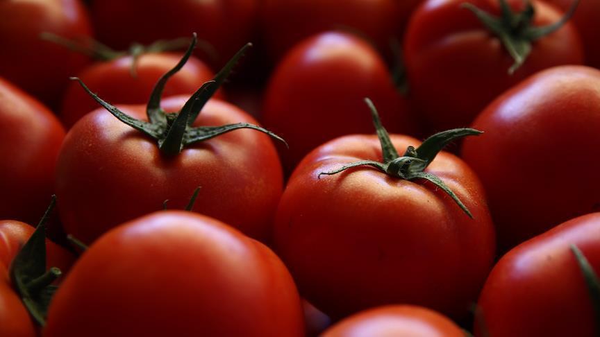 الزراعة: لم نطلب من المزارعين مضاعفة زراعة البندورة