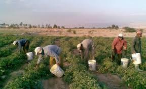رفع العمالة الزراعية الوافدة إلى 10 لكل منشأة