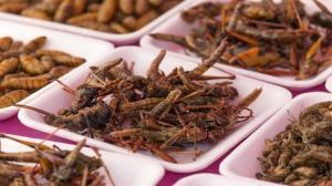 """دراسة مثيرة ..  أكل الحشرات """"يحميك"""" من أحد أخطر أمراض العصر!"""