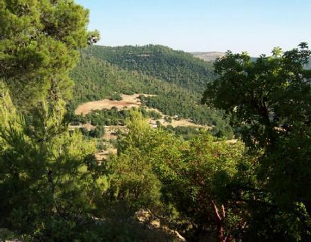 6ر1 مليون دونم مساحة الاراضي الحرجية في المملكة