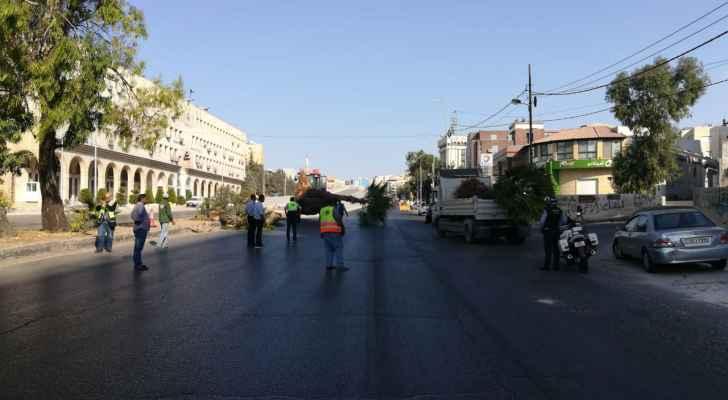 """خلع أشجار """"واشنطونيا"""" من شارع الملكة رانيا في عمّان"""