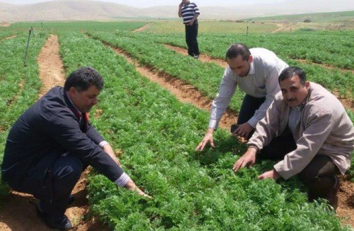 ارتفاع اسعار المنتجين الزراعيين 11%