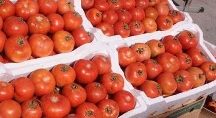 الزراعة: ارتفاع أسعار البندورة في الأسواق بسبب التغيرات المناخية