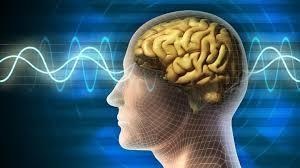 هل تؤثر زيادة الوزن على الدماغ؟